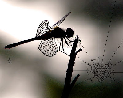dragonfly_spider_flat.jpg