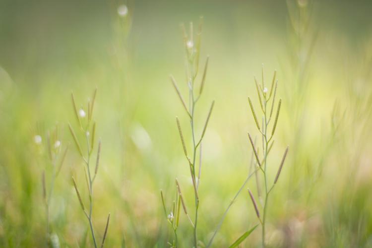 naturenerd_spring_blog_1.jpg