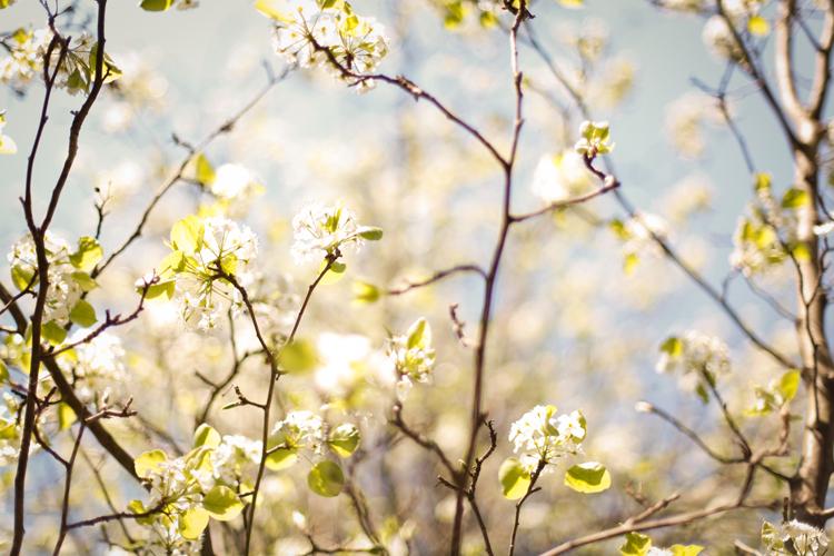 naturenerd_spring_blog_2.jpg