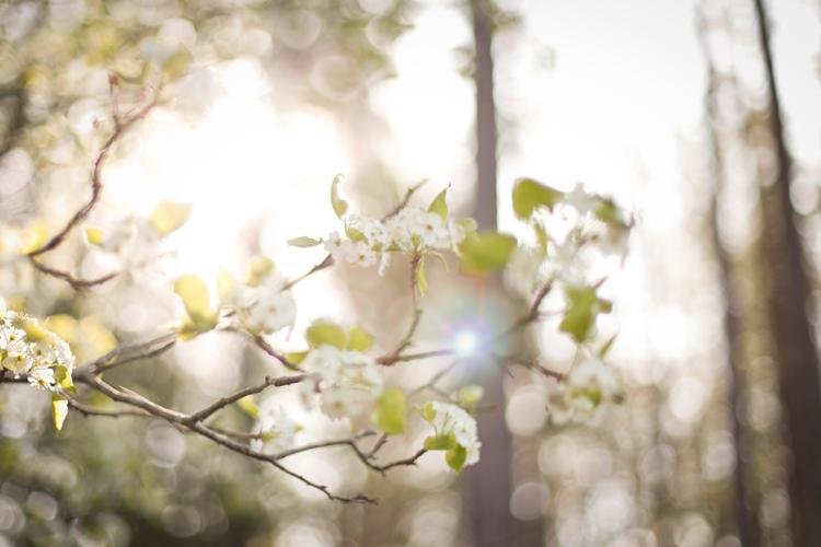 naturenerd_spring_blog_5.jpg