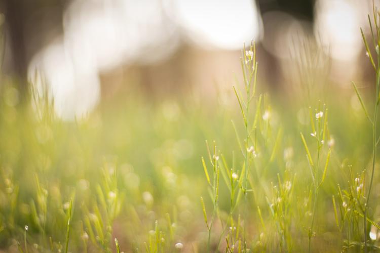 naturenerd_spring_blog_6.jpg