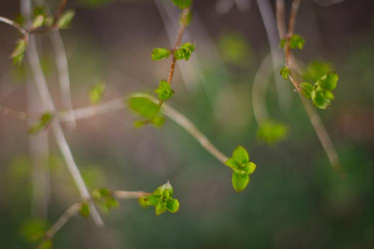 naturenerd_spring_blog_3.jpg