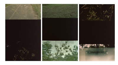 trail_strips.jpg