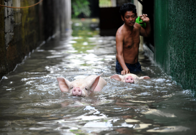 piggysswim.png