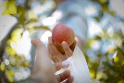 apples_-6.jpg