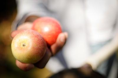 apples_-8.jpg