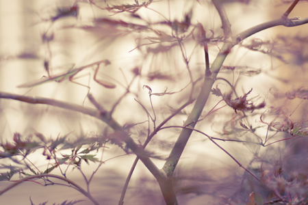 nature-9-13_blog_1.jpg