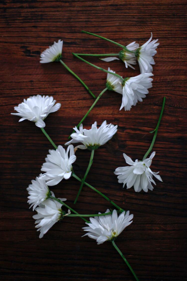 happytabletop_daisies-1BLOG.jpg