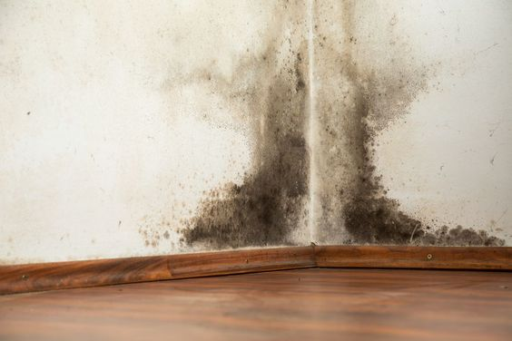 Mold in your house.jpg