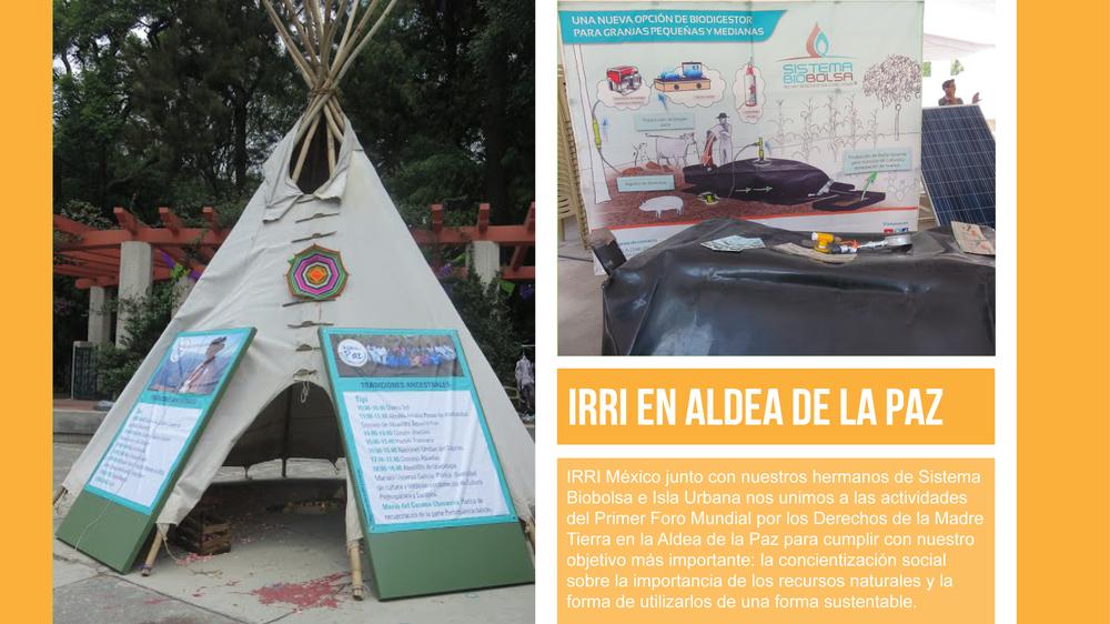 evento aldea de la paz IRRI MEXICO-01.jpg