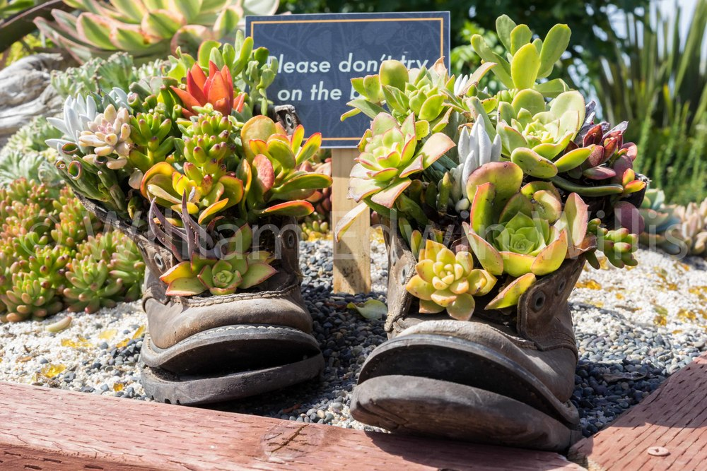 These Boots - Flower Fields, Carlsbad, CA
