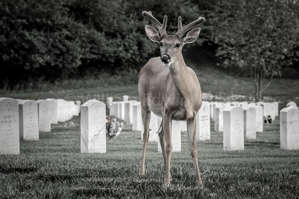 On Guard - Jefferson Barracks, St. Louis, MO