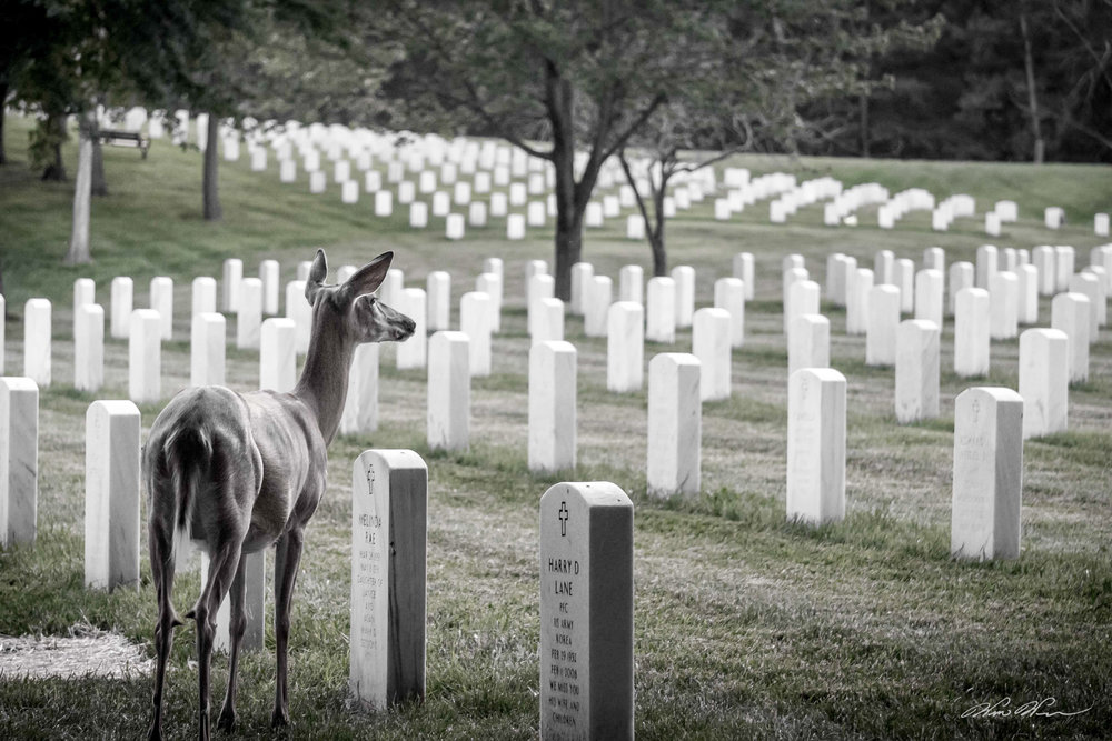 In Memorium  - Jefferson Barracks, MO