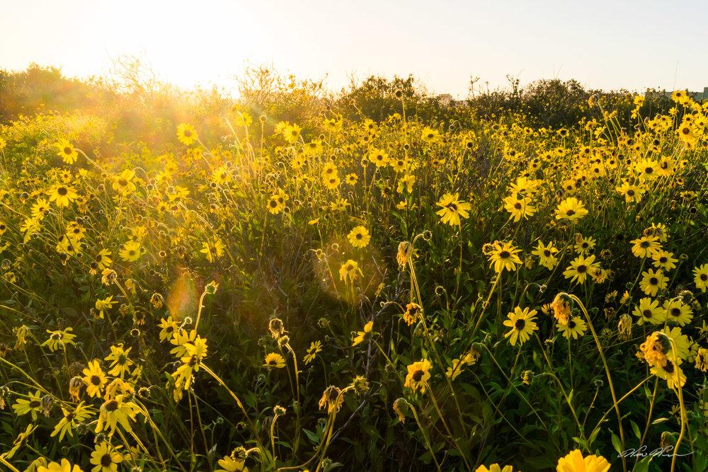 flowersatestuary-1.jpg