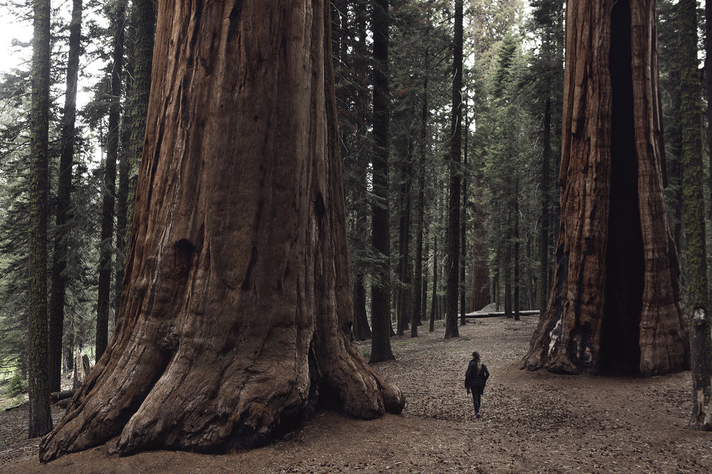 SN_07_HowITravel_Sequoia.jpg