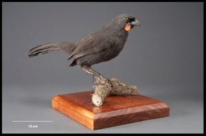 From the collection of the Museum of New Zealand, Te Papa Tongarewa