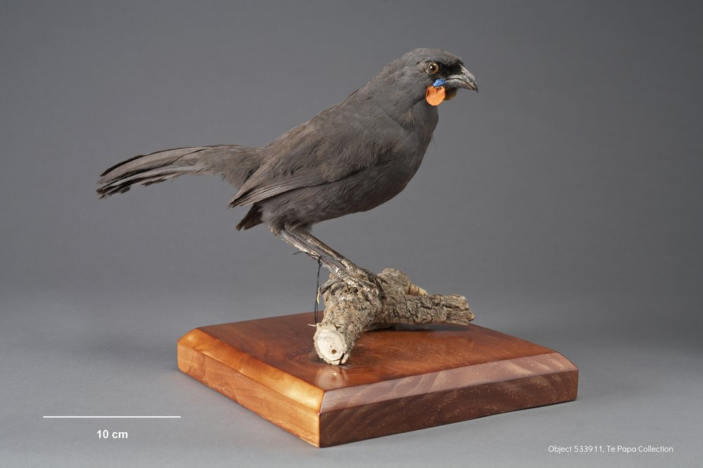 Object 533911 from the Te Papa collection