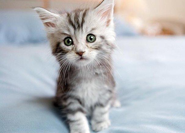 10-kitten-cuteness-1