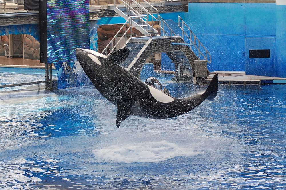 seaworld's struggles with reputation continue (photo by https://www.flickr.com/photos/hyku/)