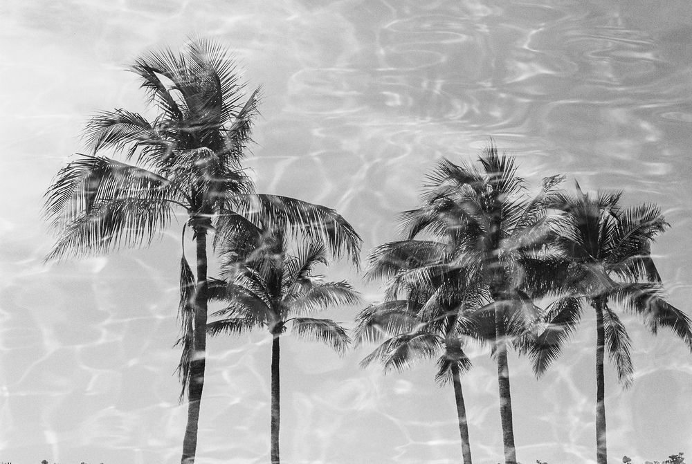 17. palm trees in water - bw.jpg