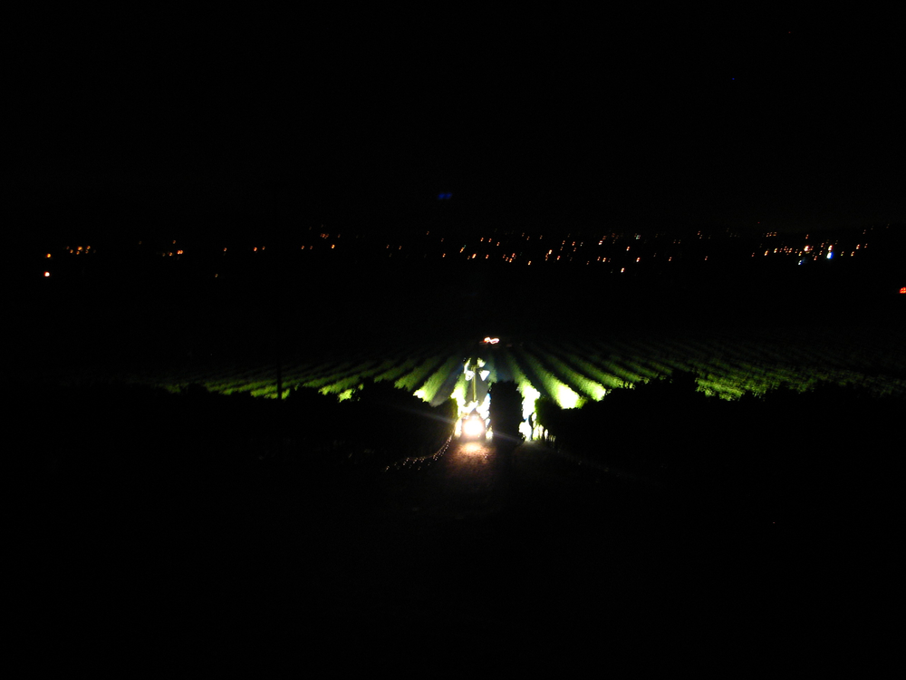 Night Harvest at Kick Ranch Vineyard