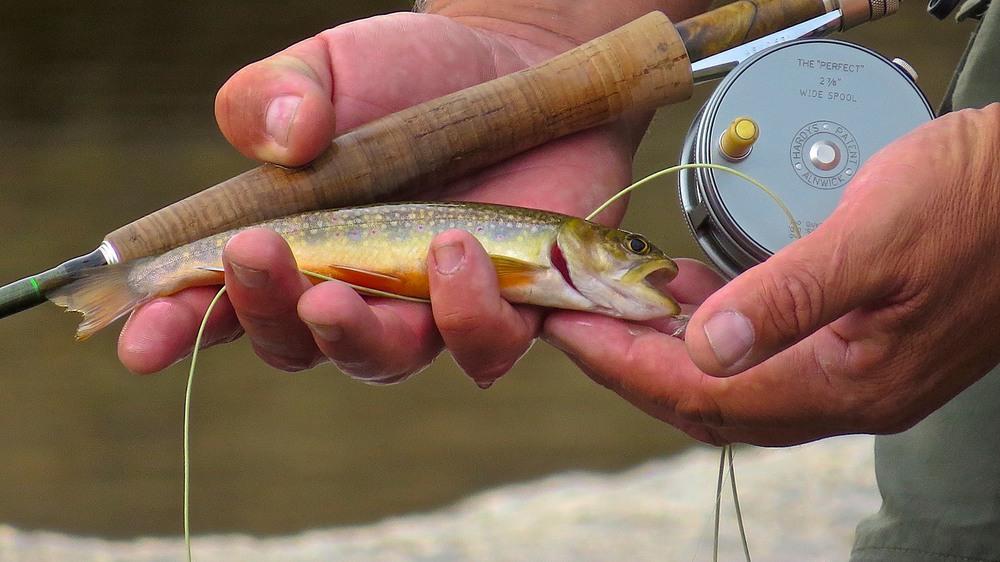 Tuolumne Perfect Fish