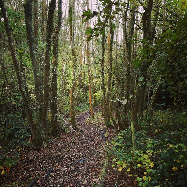 My favourite path through the woods near  where I live. True nature with an Insta filter, not that it needs enhancing ❤