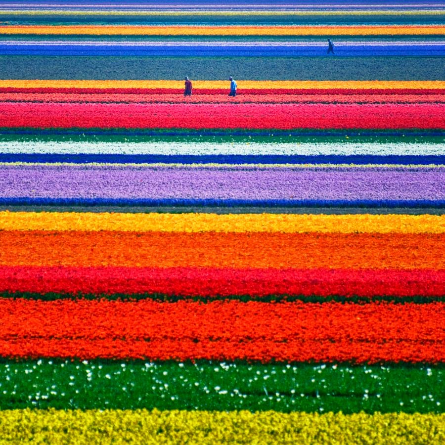 Tulip+Fields+Netherlands+Travel+Bucket+Liste.jpg