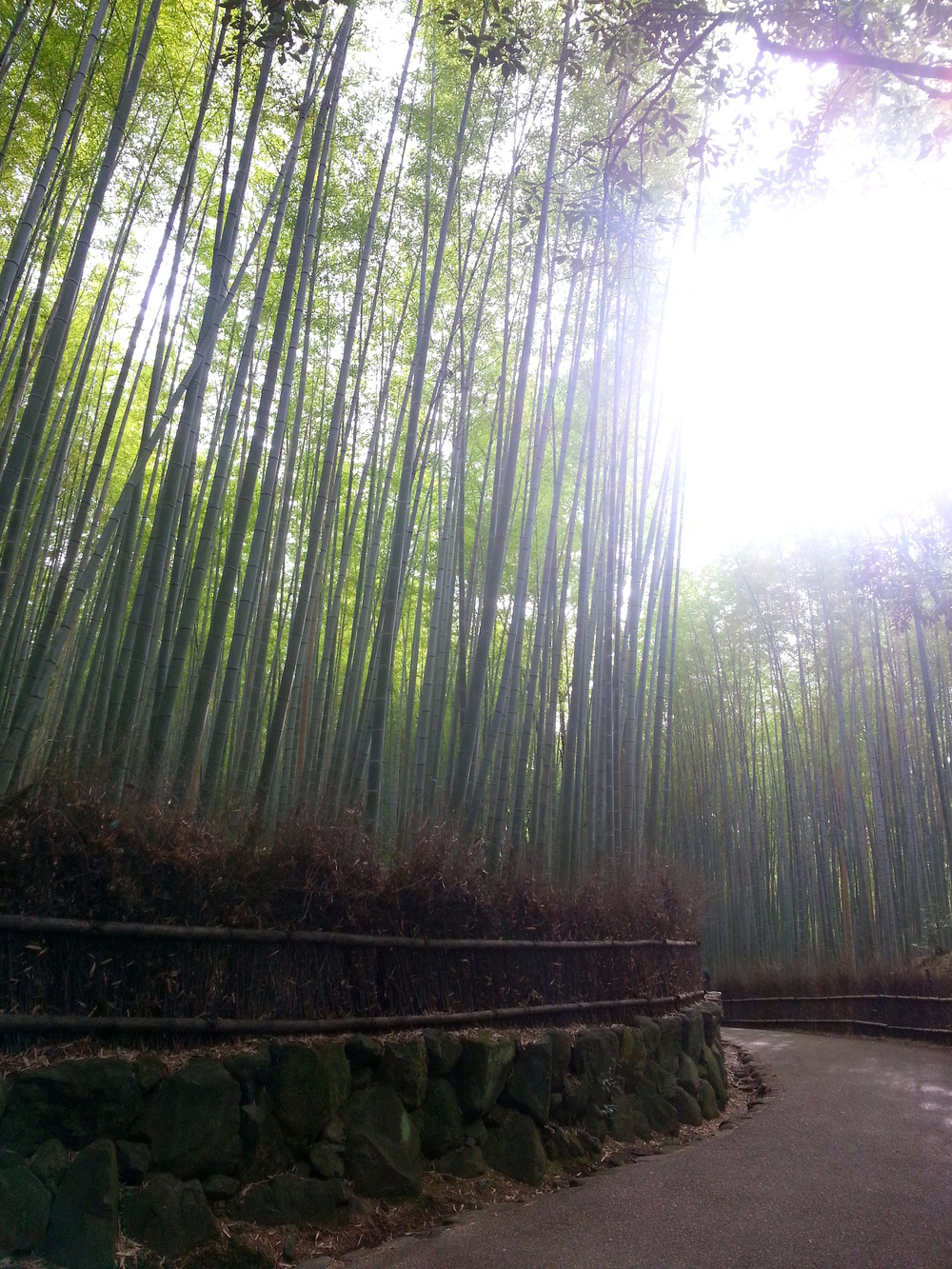 Arayshima Bamboo Grove Japan Sunlight