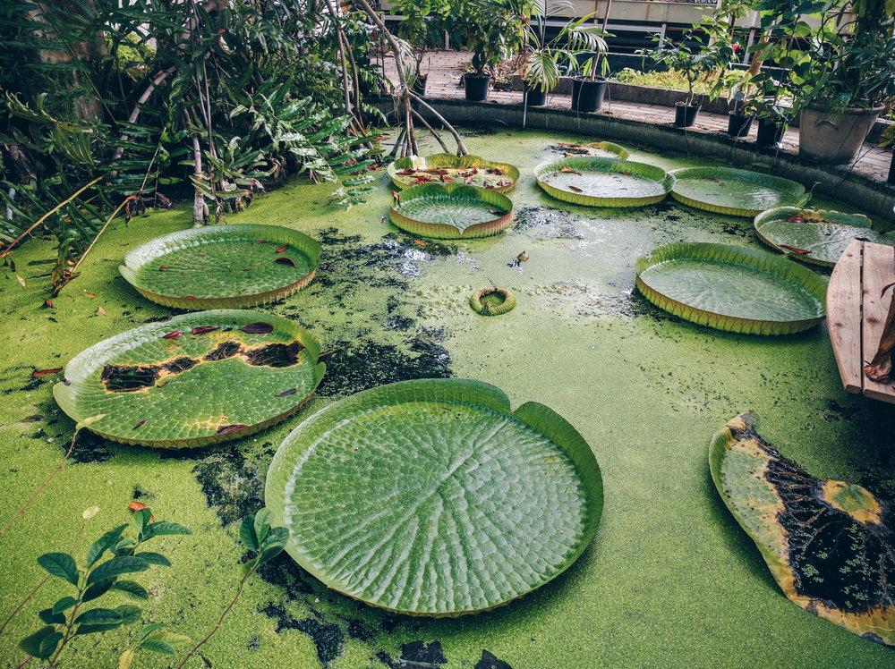 好几间温室。免费开放,很好逛。虽然种类繁多,但没有太异域的品种。