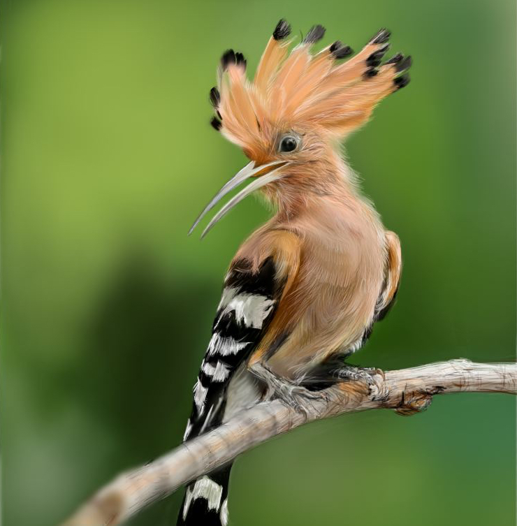 hoopoe4 copy.jpg
