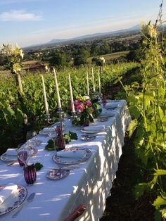 Vineyards-dinner-wine-holidays.jpg