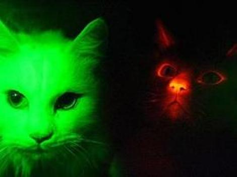 glowcats_270×202.jpg
