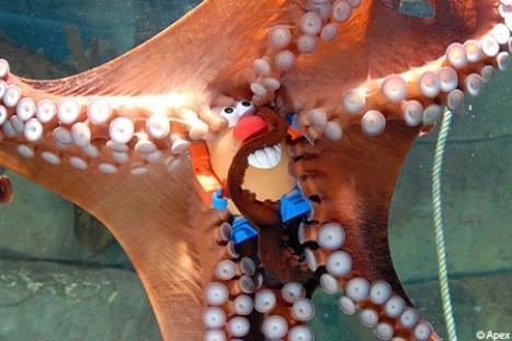 octopusax_450×300.jpg