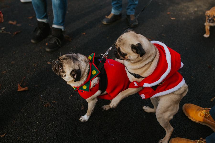 christmas_pug_meeting_liviafigueiredo.com_10.jpg