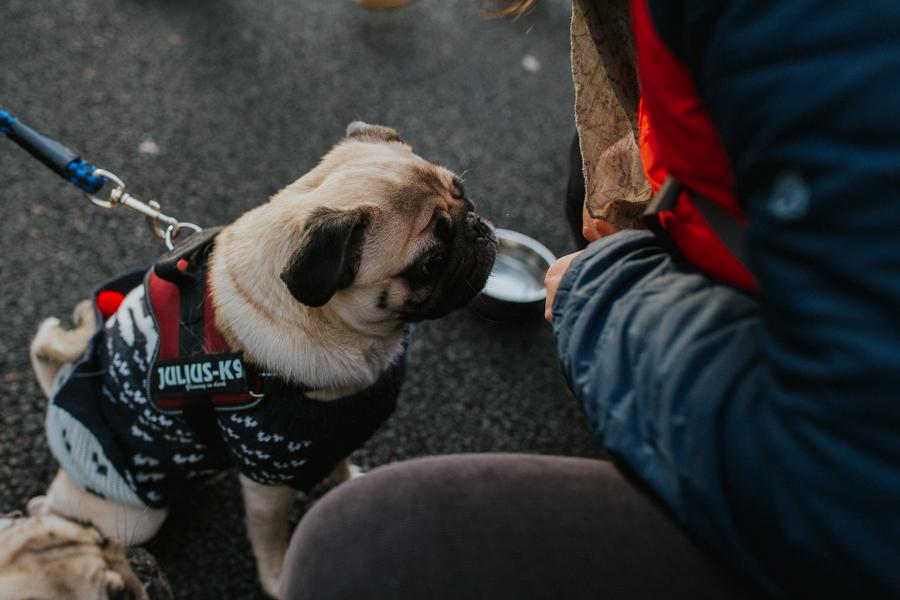 christmas_pug_meeting_liviafigueiredo.com_50.jpg