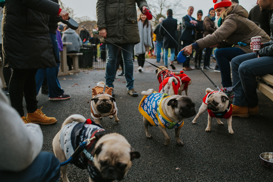christmas_pug_meeting_liviafigueiredo.com_56.jpg