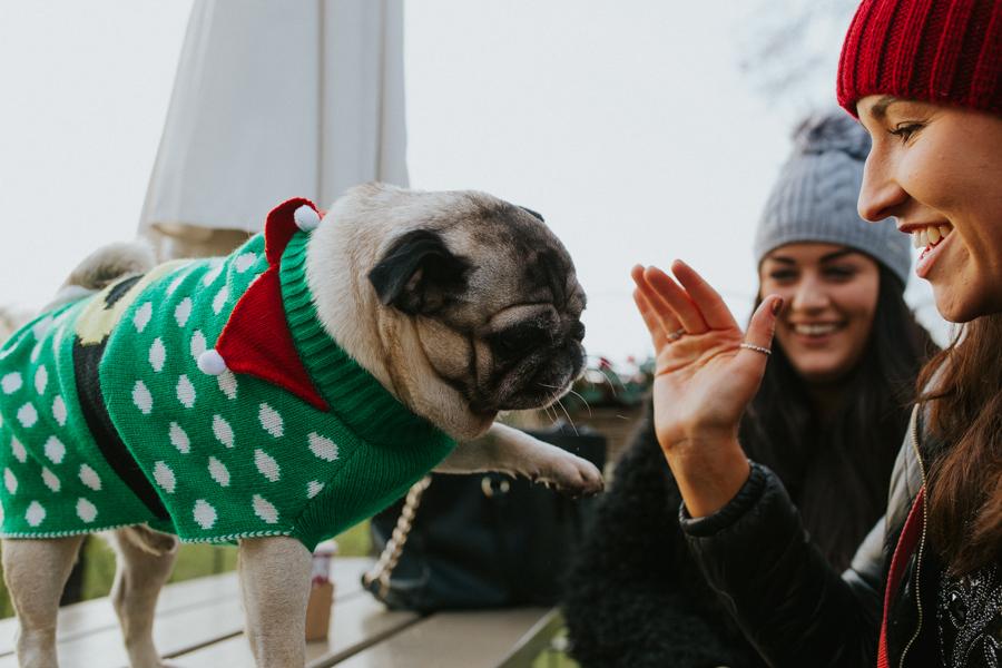christmas_pug_meeting_liviafigueiredo.com_75.jpg