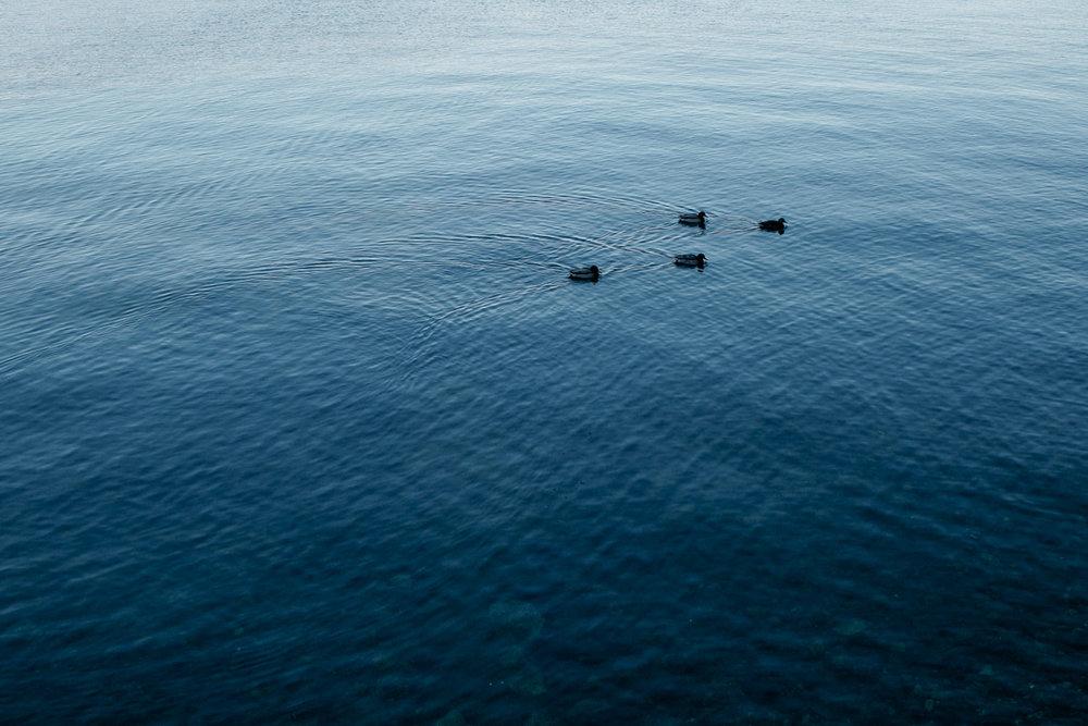 lago_maggiore_italy_liviafigueiredo_8456.jpg