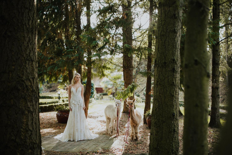 Boho Wedding Alpacas Inspiration Shoot Xpose Station House