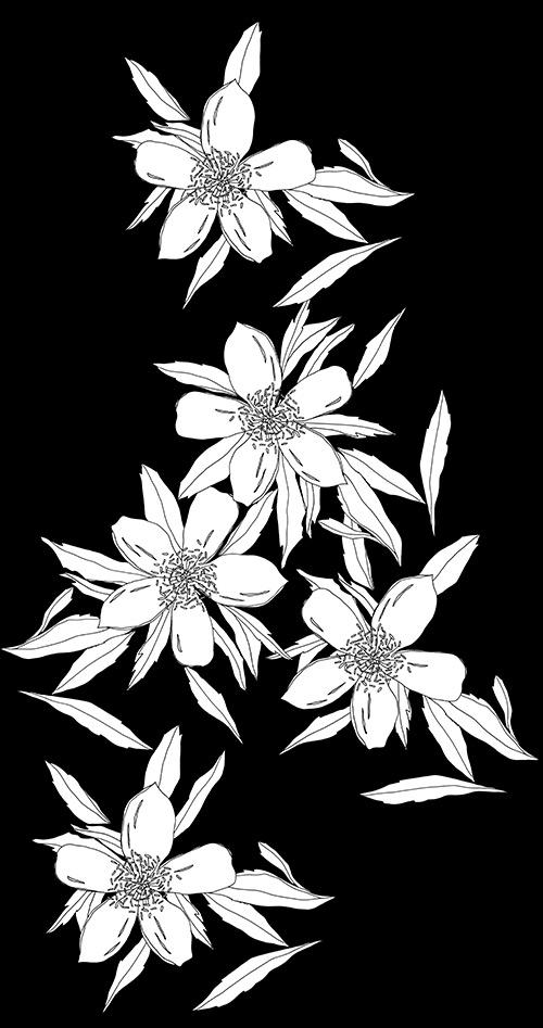 daisies_blackandwhite.jpg