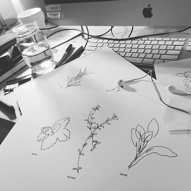 The seemingly endless experimentation with blind contour lines continues! Rendering my botanical illustrations a little different then normal tonight #messyworkspace #workitout #mondaymood #botanicaldrawing #botanicalillustration #herbs #blindcontour #contourdrawing