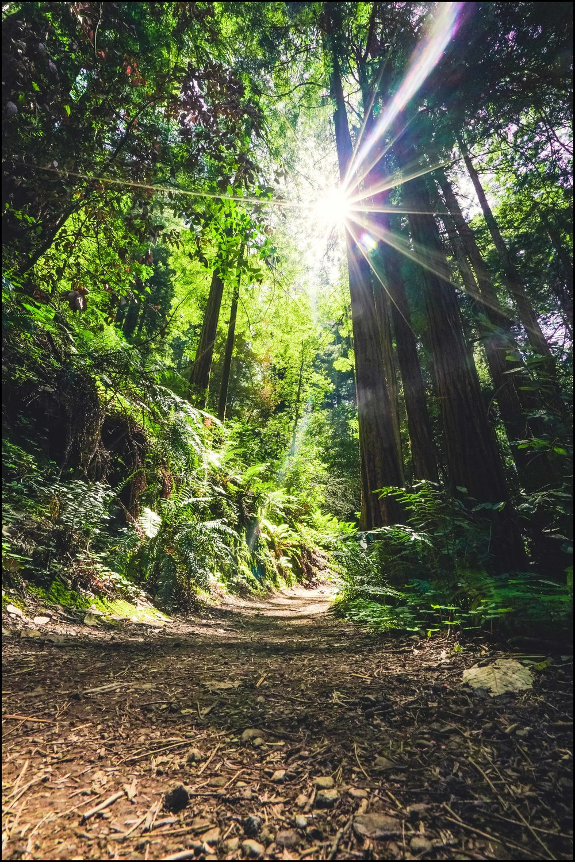 mountain trail.jpg
