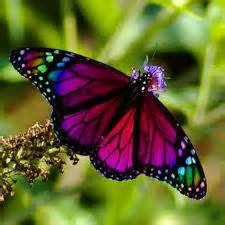 Remember, the butterfly that now soars in freedom had to endure dark seasons of confinement in its cocoon before emerging into the light! Please click on the image to hear a bit of my story.