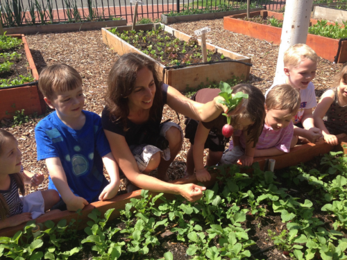Jenn Mampara harvests radishes with preK students in the garden at SWS.