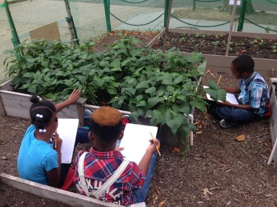 Students make scientific observations in the Watkins Vegetable Garden.