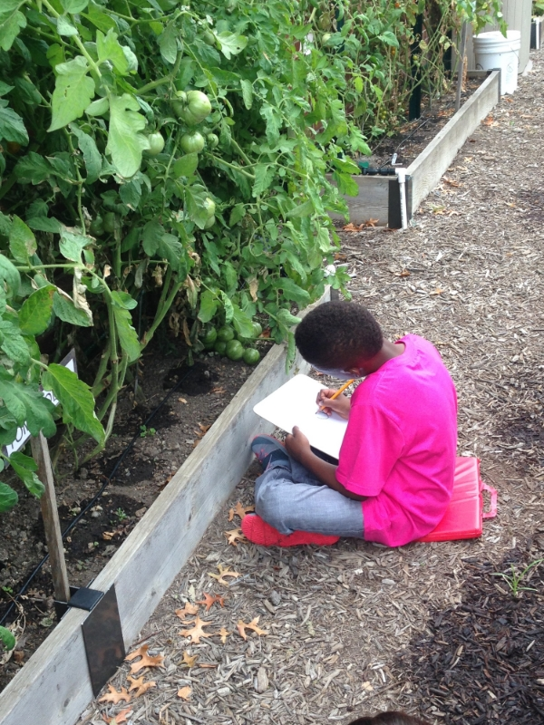 A student makes scientific observations in his FoodPrints journal in the garden at Watkins.