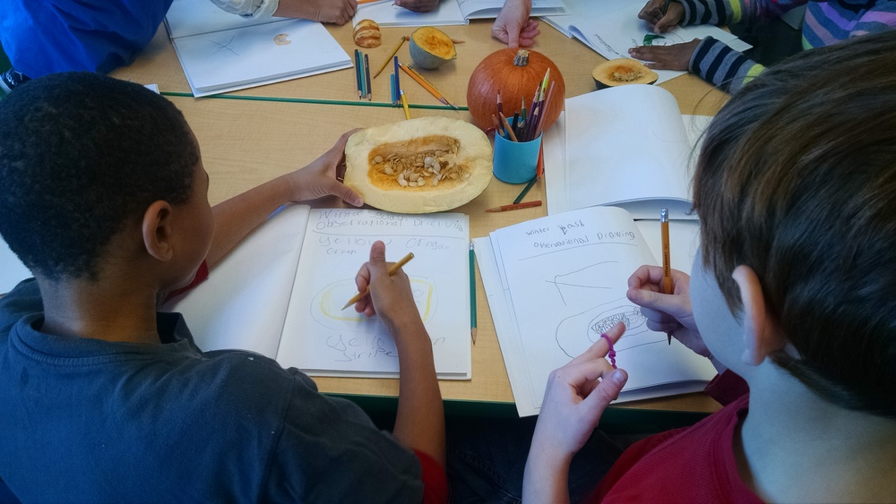 3rd graders doing observational drawings of various winter squash.
