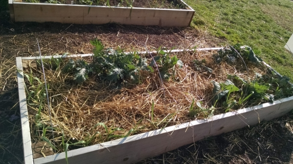 A garden bed at Tyler is prepared for the winter weather.