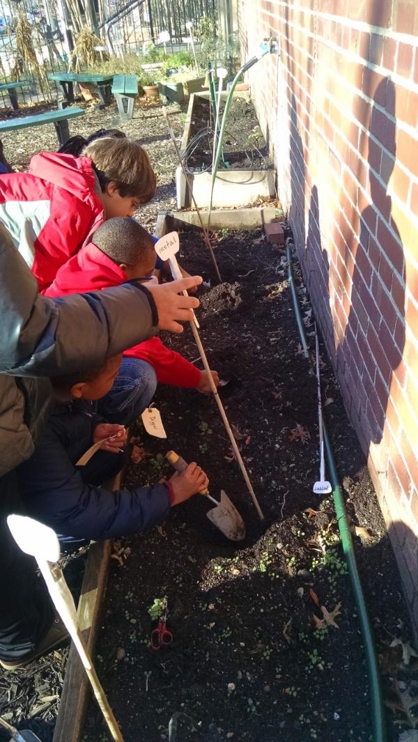 Watkins students working in the garden.